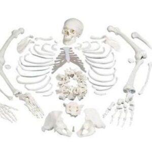Kostur u dijelovima